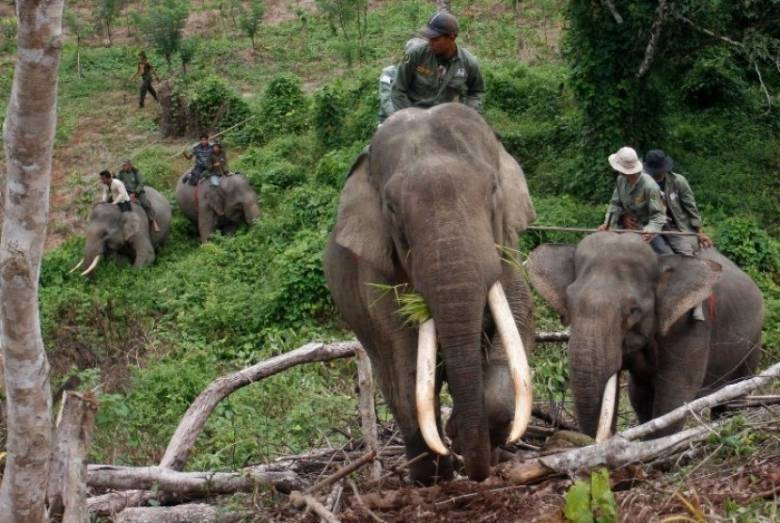 Telepon Merah Selamatkan Gajah