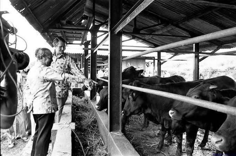 Sapi Banpres daripada Soeharto