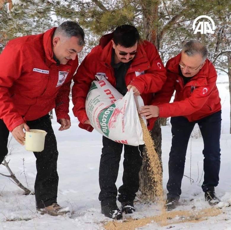 Turki Menebar Gandum untuk Dimakan Burung