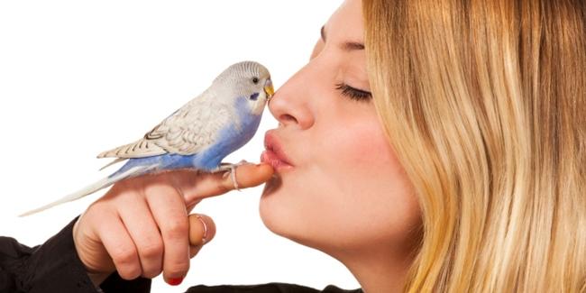 Redenominasi di Pecinta Burung Berkicau, Jangan Bohongi Istri!