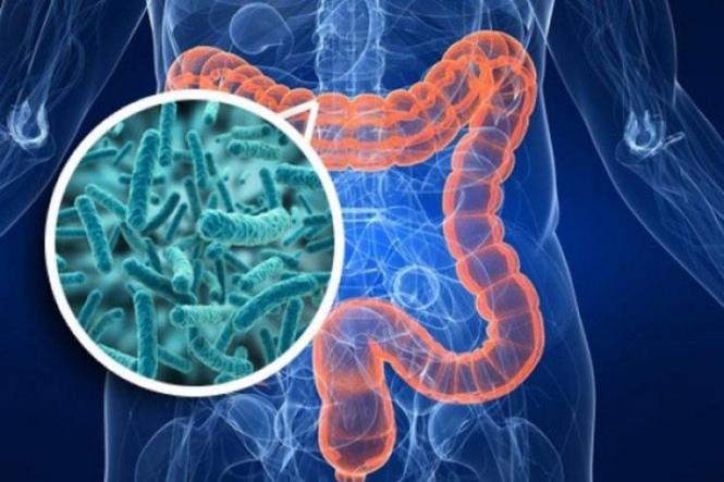 Bagaimana Mengendalikan Mikrobiota?